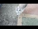пропавший кот