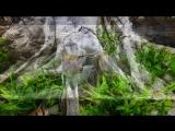 Аквадизайн от ARSTONE Premium 3D Aquarium Backgrounds