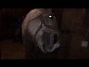 В лошадь вселились демоны. Лёля в главной роли