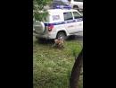 Злой пёс /Crazy dog