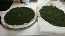 Приготовление чая из черной смородины Часть третья и четвертая