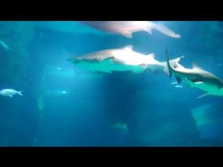 московский океанариум 2018 Акулы Миша и Маша