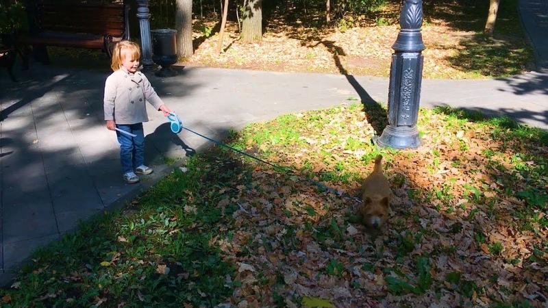 Катя выгуливает пряника. Как вам Пряник? Собачка для ребенка