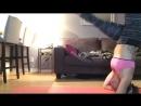 Yoga fail cats face plant