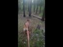 Дог трекинг квест Сороковая миля 1