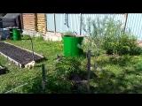 12 мая Сюзи Фрида и Муля в саду