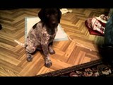 Apach - GSP - first day at home