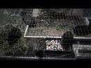 Малятки крольчатки подросли и теперь расширили жилплощадь