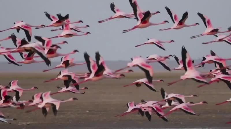 Амбосели Национальный парк в Кении