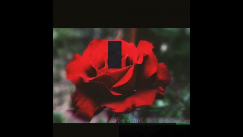 × rose ×