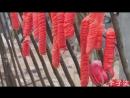 Ли ЦзыЦи - ДЕВУШКА С ХАРАКТЕРОМ! В ожидании весенних цветов ''Дай ЧуньНуань Хуа Кай''. Вяленые овощи ''ШайГань дэ ШуЦай'' с подк