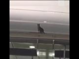 Полиция в аэропорту США неделю ловила сбежавшего кота