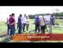 Альметьевский проект «Овощная долина» заинтересовал зарубежных фермеров