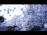 KASHIWA Daisuke - april.#19 (MUSIC VIDEO) from Re-