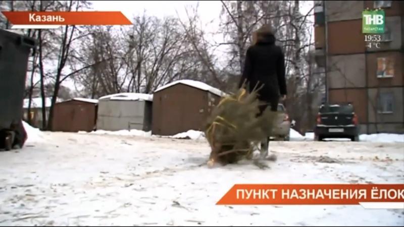 Новости на телеканале ТНВ: куда сдать ёлку?