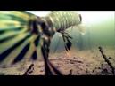 Ловля Щуки на Карася! Подводное видео! Рыбалка на Щуку!