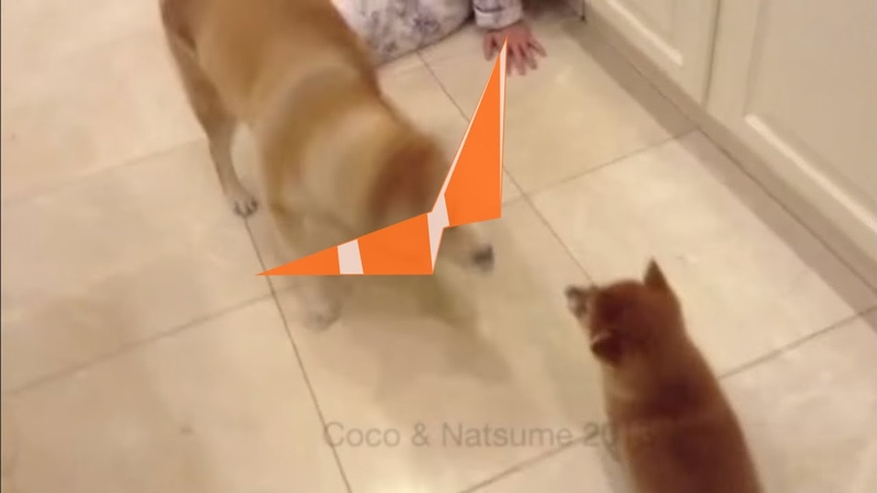 Angry Shiba Inu Transforms into Drill and Pierces the Heavens
