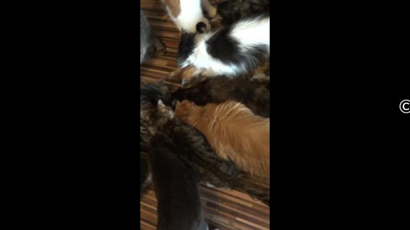 Кормление котиков
