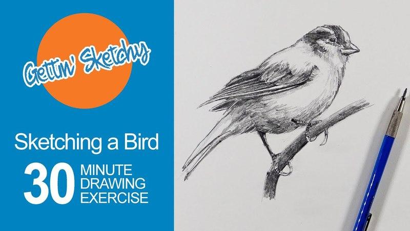 Sketching a Bird Gettin' Sketchy Live