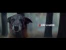 Социальный ролик о преданности собаки