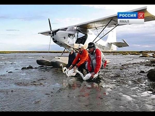 Команда лучших орнитологов России и зарубежья наблюдает на Ямале за птичьими маршрутами