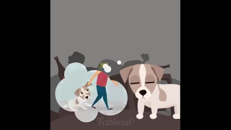 причины для отказа от животного