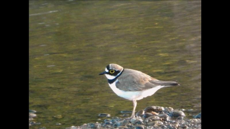 птицы певчие 7 часть однажды в америке золотая флейта