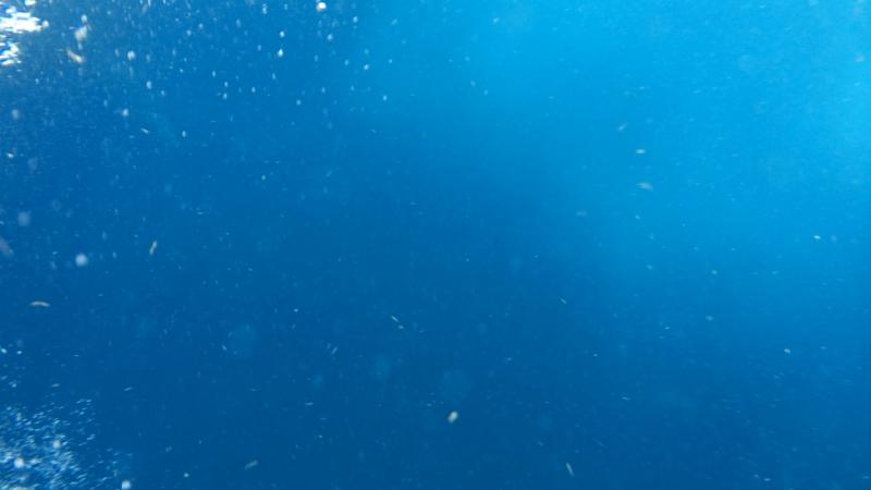 Мексика Карибское море Китовые акулы