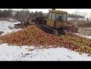 Партия санкционных яблок