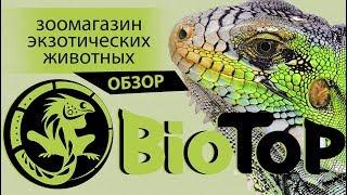 BioTop,Пауки-Птицееды Тирасполь! Змеи и другая экзотика.(ВИДЕООБЗОР,МихуВадим)