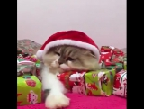 Это все мои подарки!