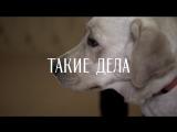 Как воспитывают собак-поводырей