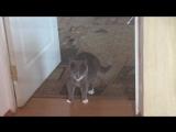 Котя и скотч