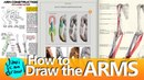 TOP TUTORIALS FOR LEARNING HOW TO DRAW ARMS
