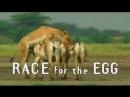 3. Наперегонки к яйцеклетке / Race for the Egg Брачные игры в мире животных / Battle of the Sexes in the Animal World 1999
