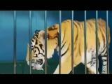 Ищу тебя Хасавюрт | Пятигорский Зоопарк