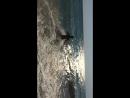 Море 🌊 зовёт , волна поёт 🎼а я такая отдыхаю🤗💃