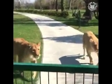 любовь животных к человеку