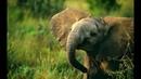 Nat Geo Wild Тайны дикой природы Индии В царстве слонов 1080р