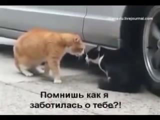 Вольный перевод общения двух котов А вы как думаете 240 X 320 mp4