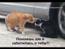 Вольный перевод общения двух котов А вы как думаете! ( 240 X 320 ).mp4