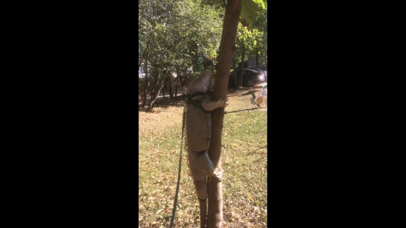 Игуана Маруся залезает на дерево
