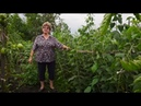 Удачная среда - посадка ремонтантной малины (Бийское телевидение)