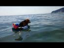 Морской патруль! Первое дежурство бигля Баси 😉😀