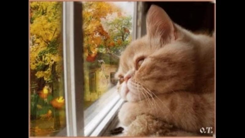 Ну привет, осень! Давай, радуй меня и удивляй!😜