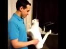 В мире животных - Это видео можно смотреть бесконечно