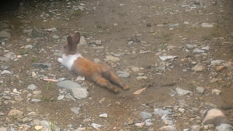 Кролики VS Витёк