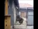 последние секунды жизни оператора vs волкодав