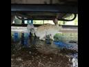 В Кургании народ умиляется кроликам, спрятавшимся от дождя под авто