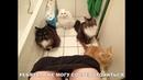 ПОПРОБУЙ НЕ ЗАСМЕЯТЬСЯ - Смешные Приколы с Животными до слез, смешные коты, funny cats 93